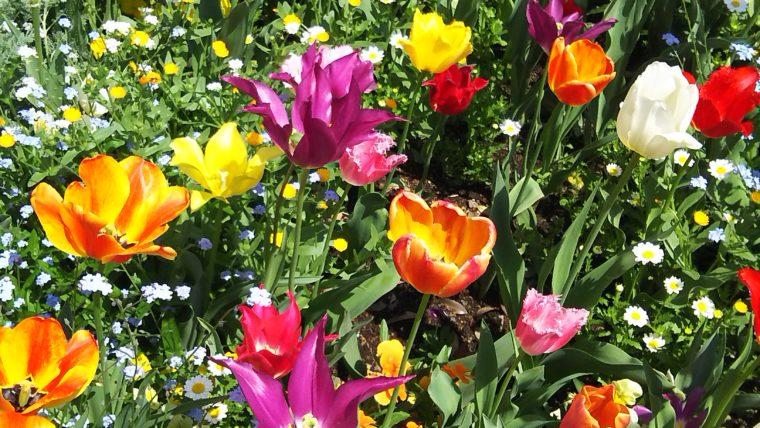 春の花壇の花たち